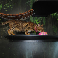 Nala in the Cat Suite