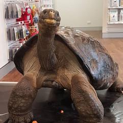 Hugo the Tortoise