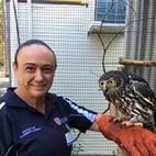 Barking Owl  Somersby Animal Hospital