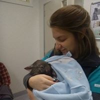 Cuddles for a baby wombat
