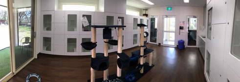 Overview of Kitty Gym