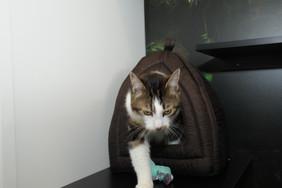Cat hive