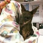 Joey  Somersby Animal Hospital