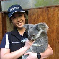 Koala  Somersby Animal Hospital
