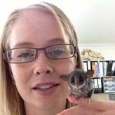 Feathertail Glider  Somersby Animal Hospital