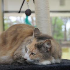 Snoozing in cat boarding
