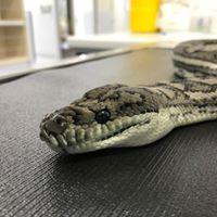 Python  Somersby Animal Hospital