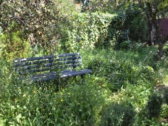 """""""Frumoasa"""" mea grădină - 1"""