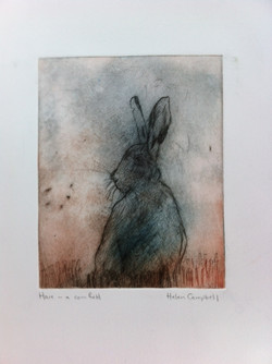 Hare in a cornfield