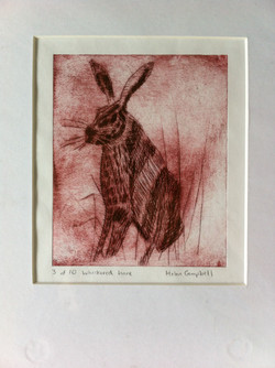 Hare in long grass