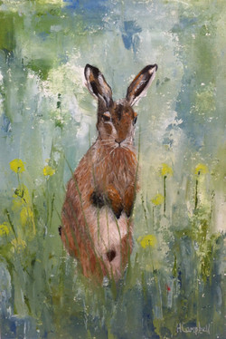 Hare among wild flowers