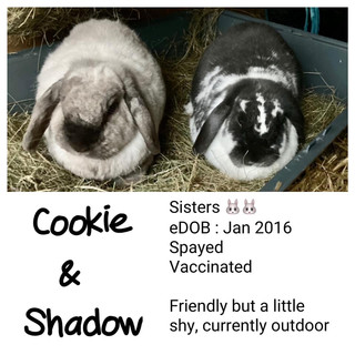 Cookie & Shadow