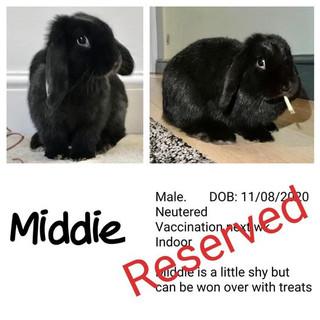 Middie