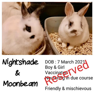 Nightshade and Moonbeam