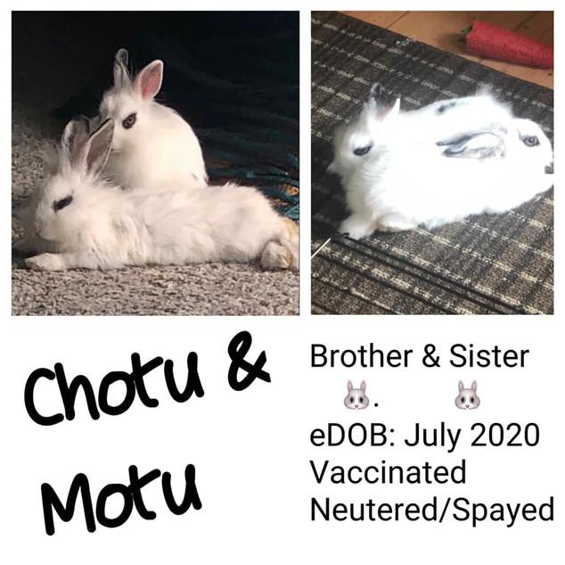 chotu and motu.jpg