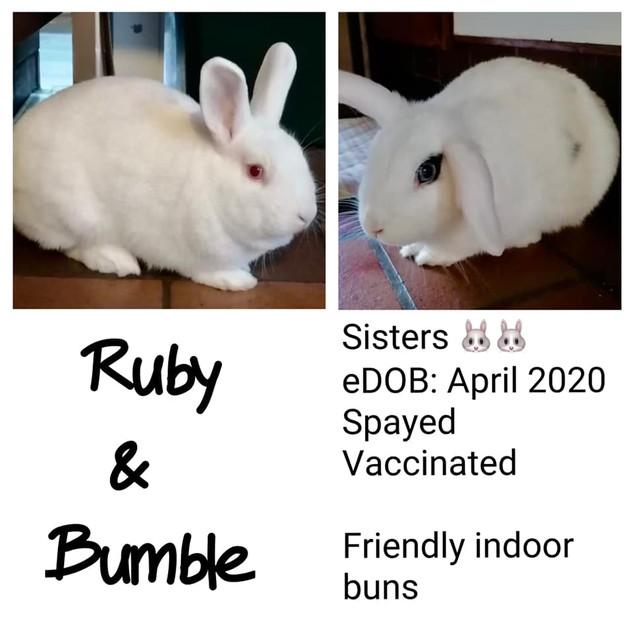 ruby bumble.jpg