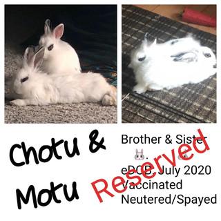 Chotu & Motu