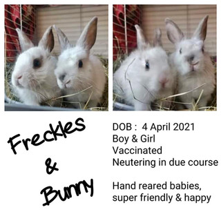 Freckles and Bunny