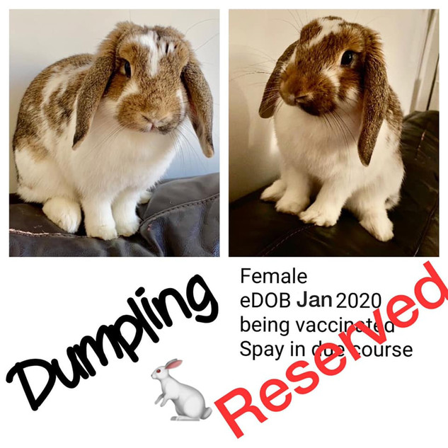 dumpling - Copy.jpg