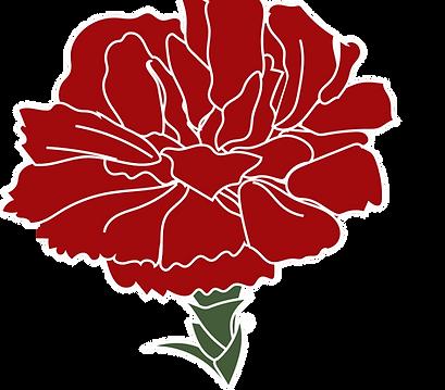 carnation1.png