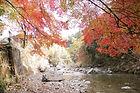 秋の摂津峡 茨木市や富田からでもすぐ