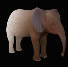 elephantback.jpg