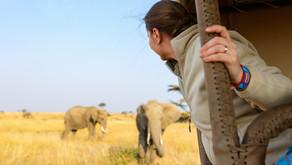 La valigia per il safari