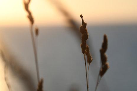 Summer evening overlooking Kattegat