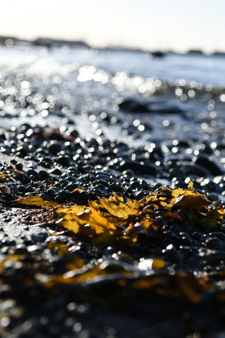 Gilleleje beach