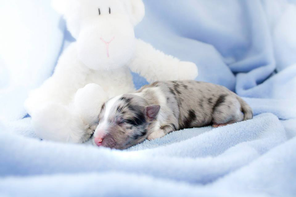 Just Born - 1 day old