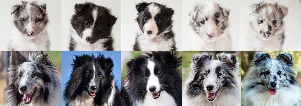 Azulian A litter before and after