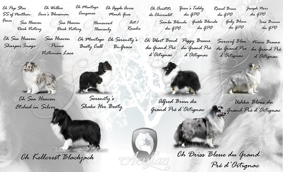Árbol genealógico y pedigree de la camada de shetland sheepdog Azulian