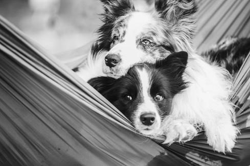Dash&Lia