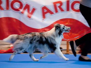 Martorell Dog Show 10/01/2015