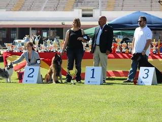 Mallorca de Mallorca Dog Show Results
