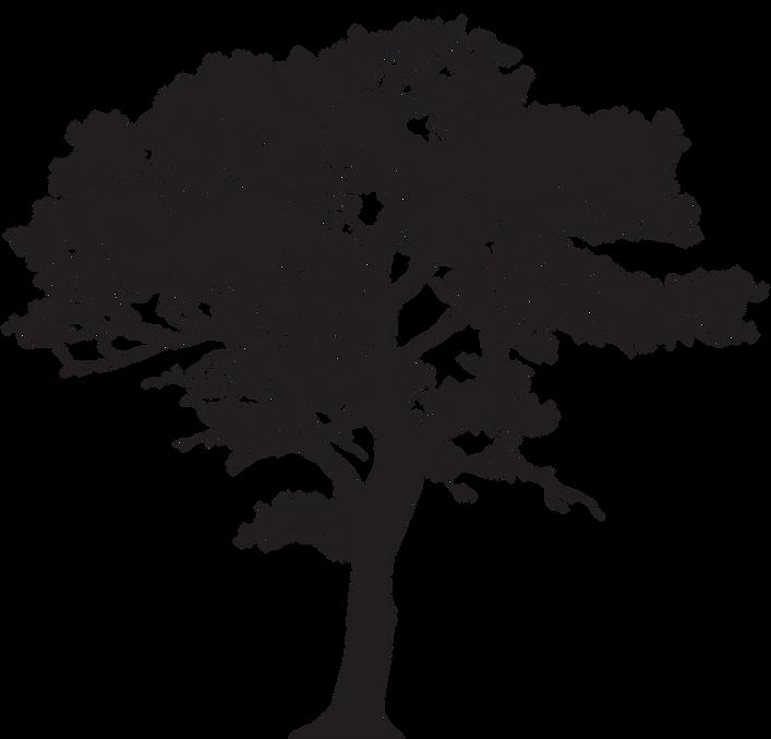 aspen-tree-trunk-clipart-8_edited.png