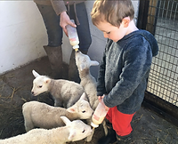 Dwyfor Ranch Rabbit Farm.png