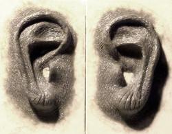 ears - mummified - sculpt.jpg