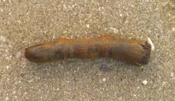 mummified_finger_relic_by_victorianspectre-d6swinu.jpg