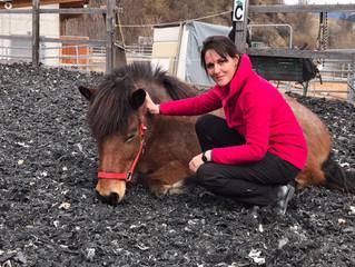 Horsesense Tagung Schweiz