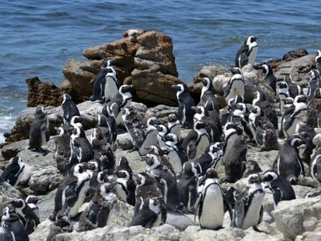 Vulnerability, Trust, and Penguins