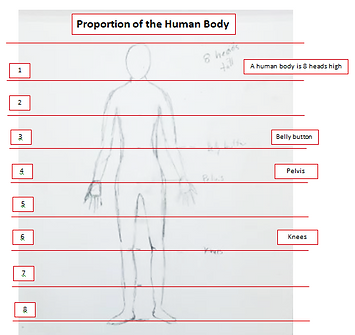 Proportion of the Human Body Handout.PNG