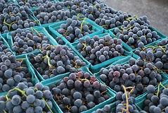 Tontitown Grape Festival
