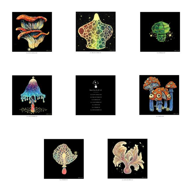 nightcaps8-14 copy.jpg