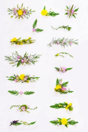 weeds-and-wonders-line-breaks-and-corners-large.jpg