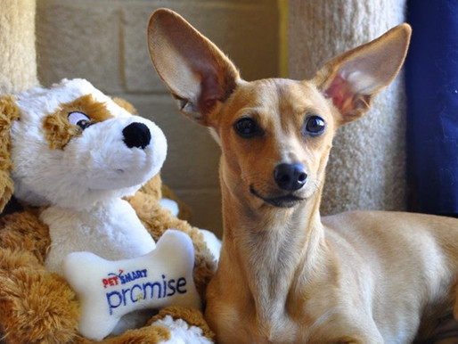 Family Promise Celebrates National Make a Dog's Day!