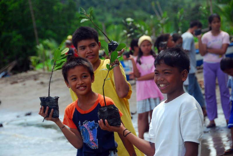 Mangrove Foundation image