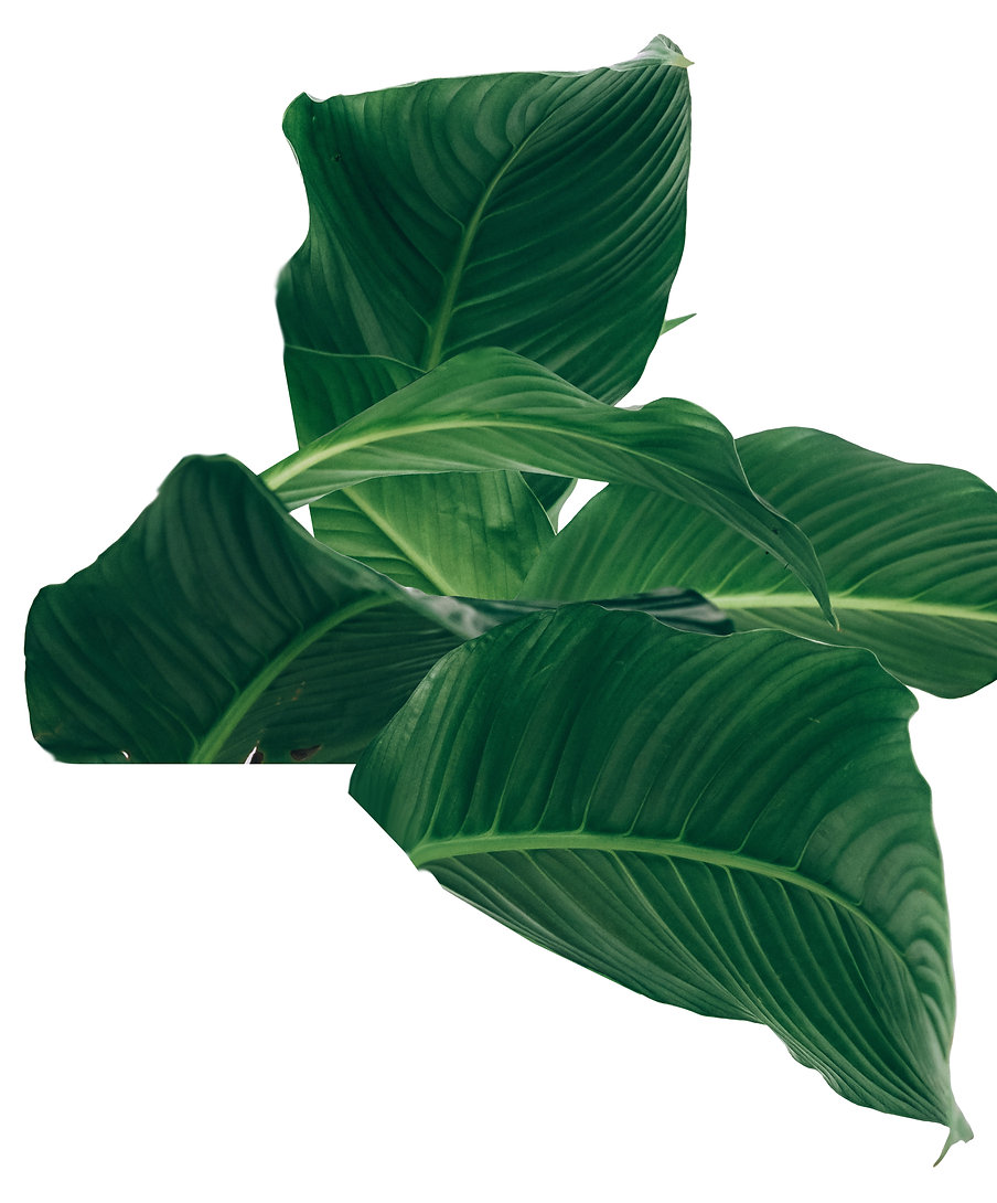 tropic leaves