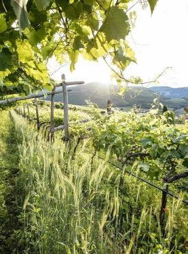 alpine-wine-oltradige-alto-adige.jpg