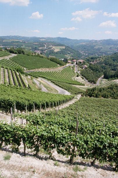 Vineyards Chris.JPG